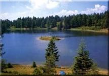 hundefreundliches Gasthof zum Hirschen in Unsere liebe Frau im Walde