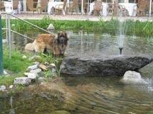 hundefreundliches Gartenhotel Magdalena in Ried im Zillertal